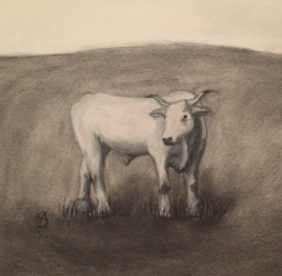 A commissioned charcoal portrait of a beloved pet steer.