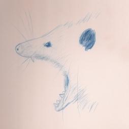 Opossum Gape