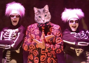 A friend asked me to insert her cat into the David S. Pumpkins sketch. I obliged.